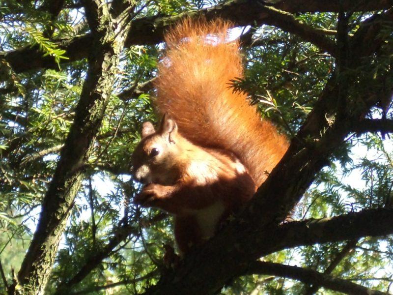 Wiewiórka z Parku im. Jana Poniatowskiego. Fot. Sebastian Pintera